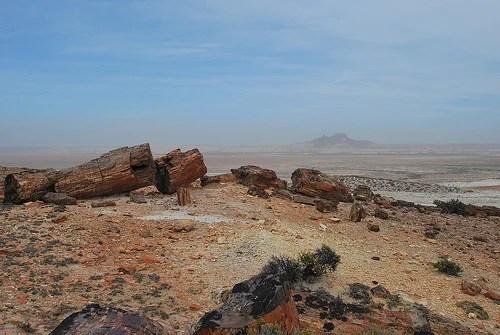 Resultado de imagen para Bosque petrificado de Jaramillo argentina