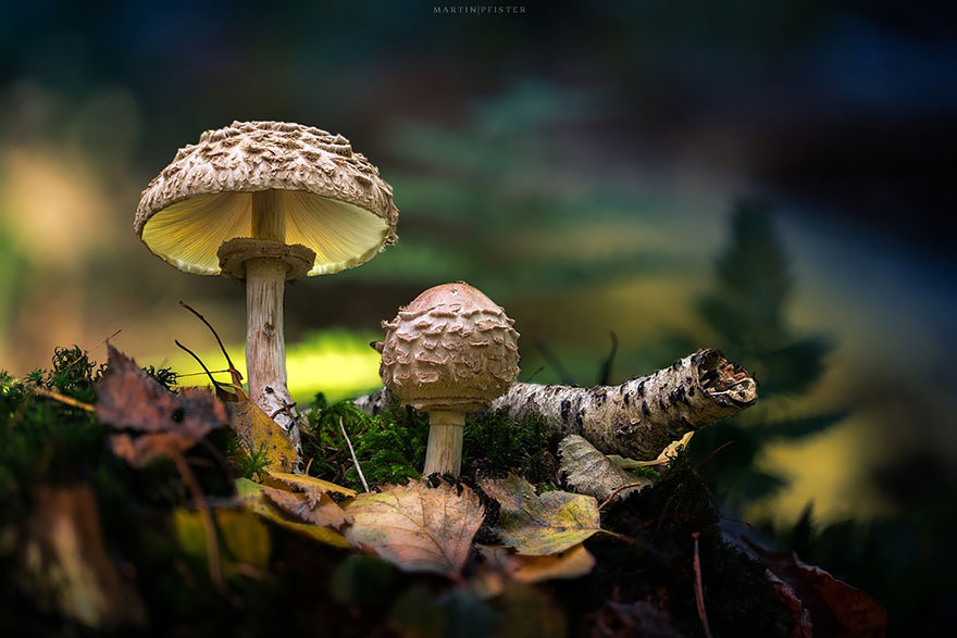 Cute Witchy Wallpapers Glowing Mushrooms Look Like From Fairytale Lands Vuing Com