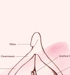 diagram of vagina [ 2240 x 1260 Pixel ]