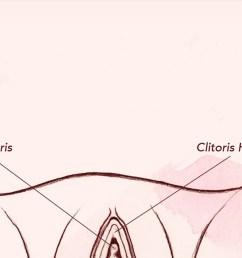 diagram of vagina [ 2245 x 898 Pixel ]