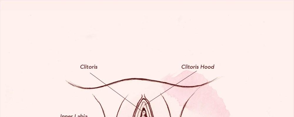 medium resolution of diagram of vagina
