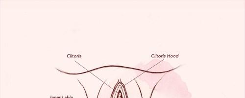 small resolution of diagram of vagina