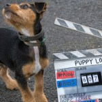 Puppy Love comes to BBC Four