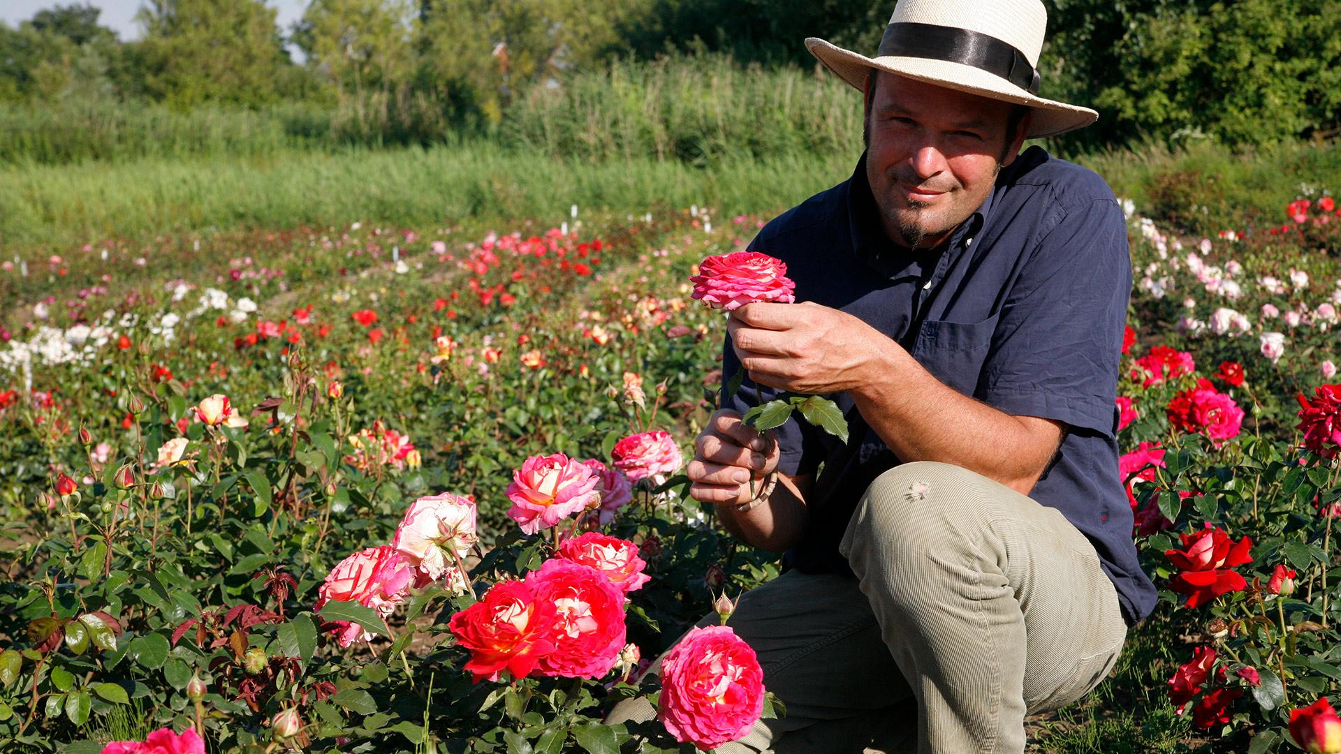 vierl nder rosenhof mehr als 600 verschiedene rosensorten. Black Bedroom Furniture Sets. Home Design Ideas