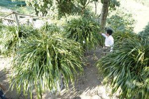 Kinh nghiệm trồng và chăm sóc địa lan