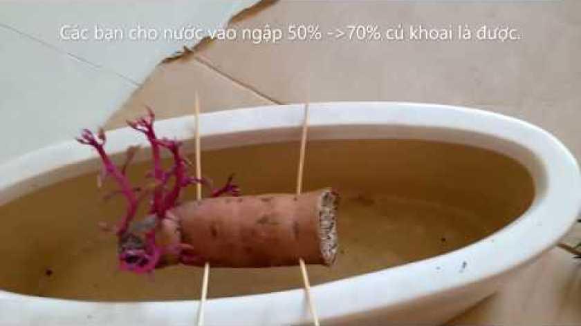 cách nấu khoai lang mật - Bonsai Khoai Lang Đơn Giản Ai Cũng Làm Được