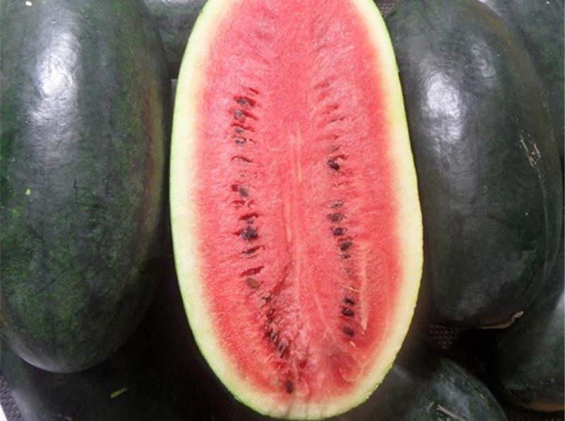 30 stücke melone samen kernlose wassermelone samen obst Pflanzen Vielzahl