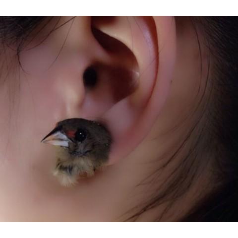 【魔界ノ風鷹】小鳥の頭イヤリング4