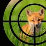 Закон о вольерной охоте