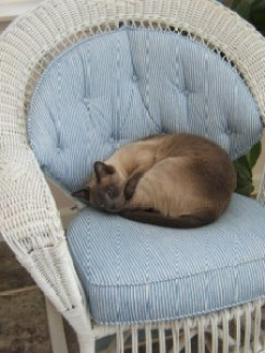 Siamese cat, Grant