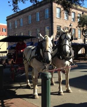 Savannah carriage