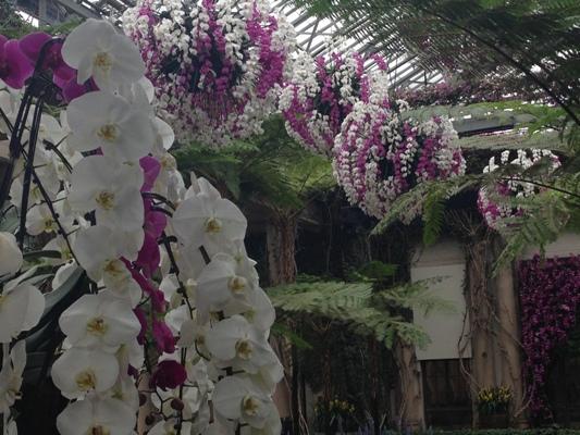 orchids, Longwood