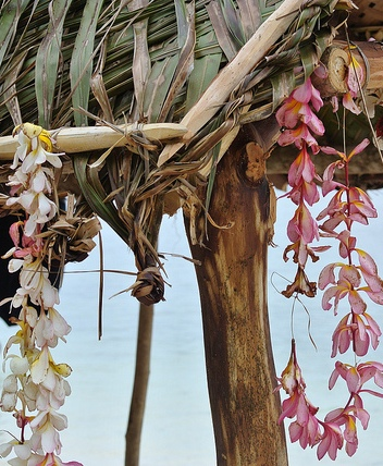 orchid-leis