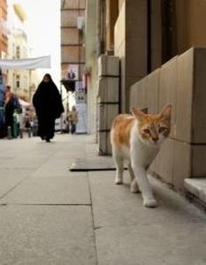 Kedi, cat, Istanbul