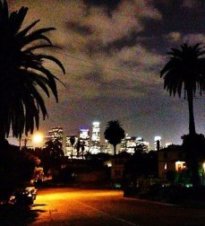 Los Angeles, palm trees, night