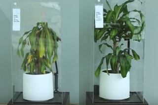 IKEAが「いじめ防止」を訴え植物実験する。全てはバイブス!