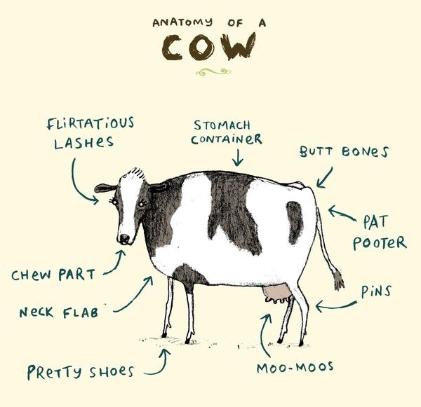 dairy cow parts diagram 1955 chevy wiring anatomy | vylette