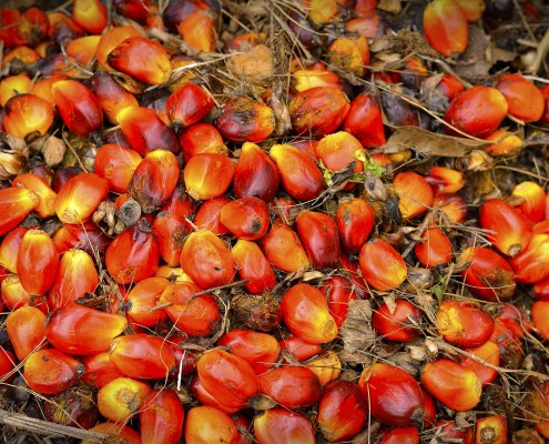 palm oil industry destroying planet