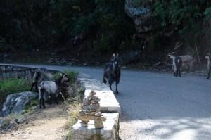 Korsika2015-226