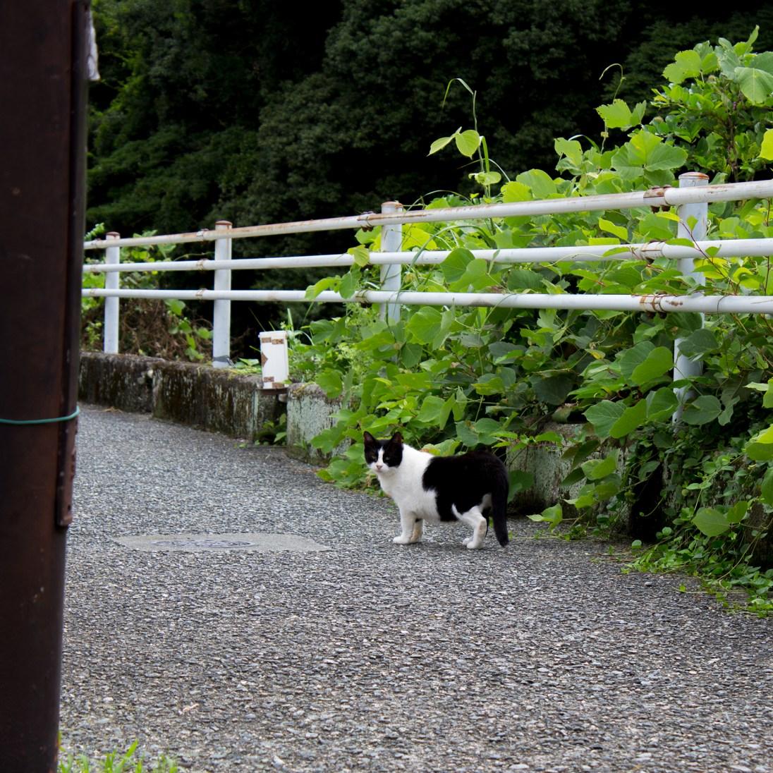0856駅から少し歩き、早川沿いに出るとニャンコ様が(*´ω`)
