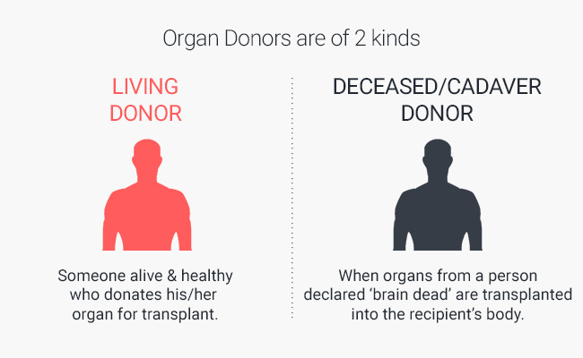 Dummy's Guide To Organ Donation | Infographics