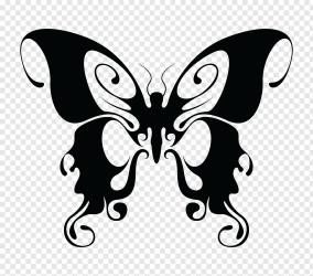 Butterfly Drawing Black and white butterfly PNG PNGWave