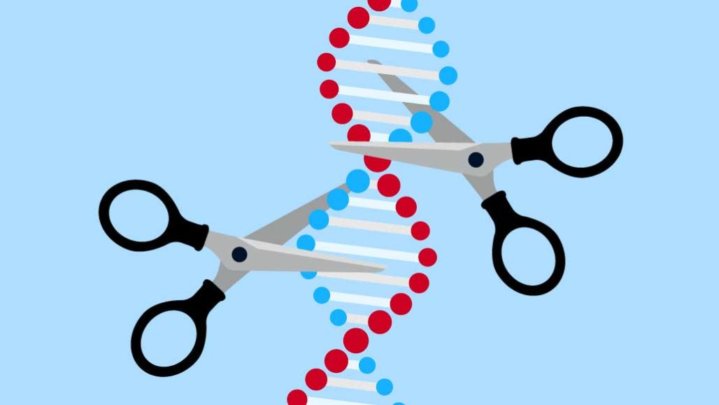 Journey to Use CRISPR against Disease Gains Ground