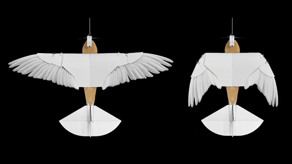 "Winged ""PigeonBot"" Flies with Real Feathers"