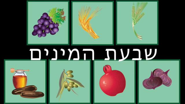 Seven Wonderful Fruits Of Israel Children's Videos