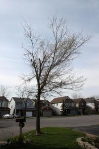 Our Poor Tree