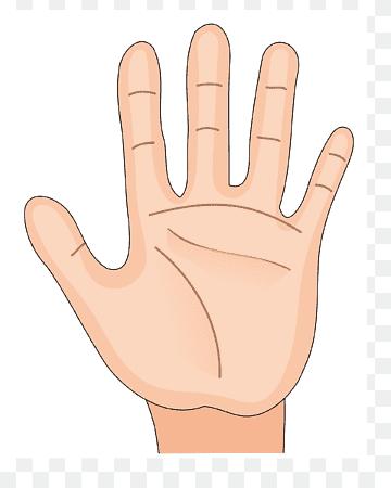 Gambar Telapak Tangan Animasi : gambar, telapak, tangan, animasi, Color, Print,, Painted,, Anatomy,, Human, Anatomy, PNGWing