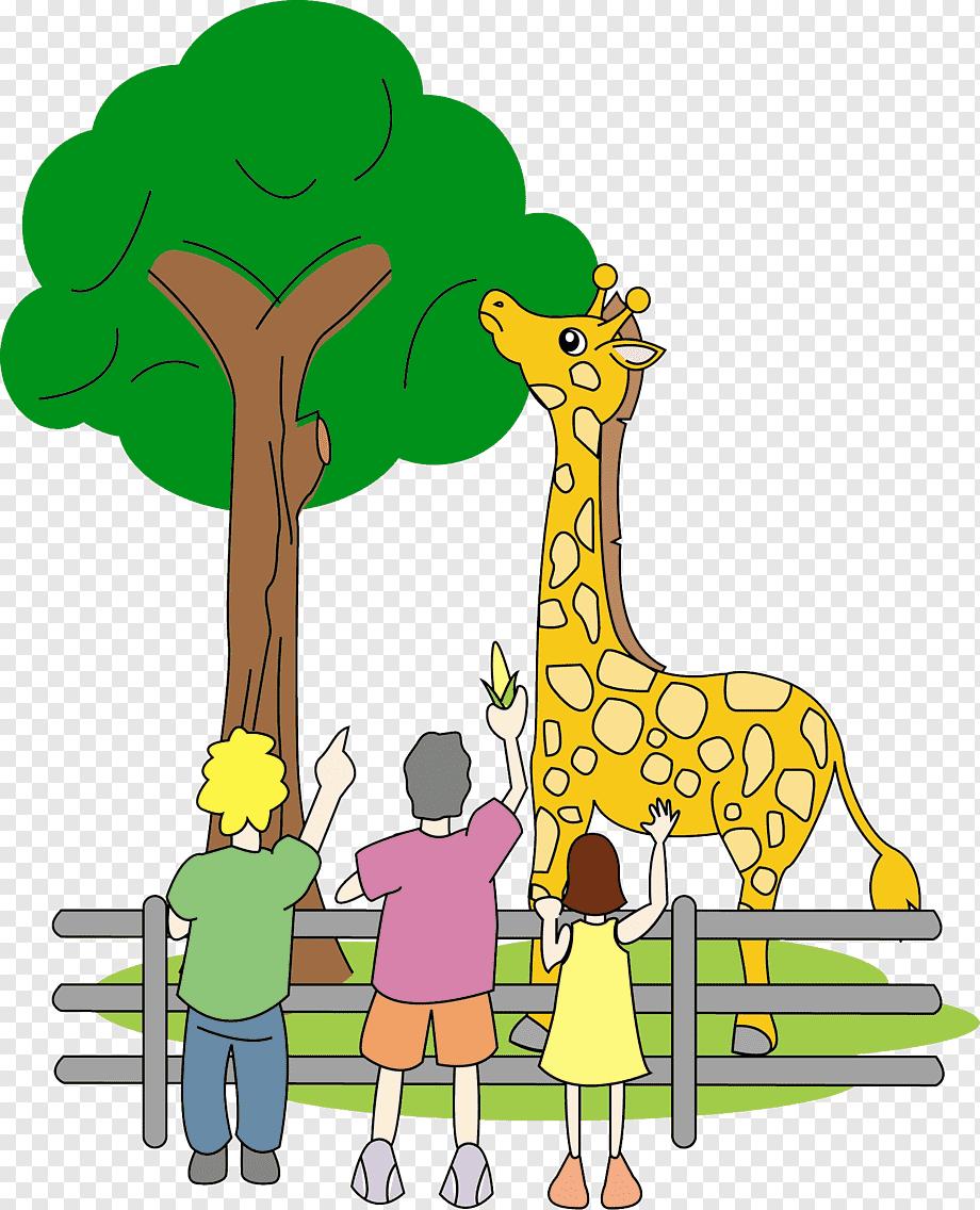 Gambar Kebun Binatang Kartun : gambar, kebun, binatang, kartun, Bukit, Merah, Orang, Island, Foundation, Orangutan, Laketown, Resort, Penang,, Orangutan,, Animals,, Grass,, Fauna, PNGWing