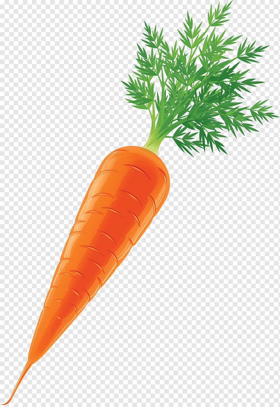 Gambar Sayuran Wortel : gambar, sayuran, wortel, Sayuran, Wortel,, Makanan, Alami,, Makanan,, Jeruk, PNGWing