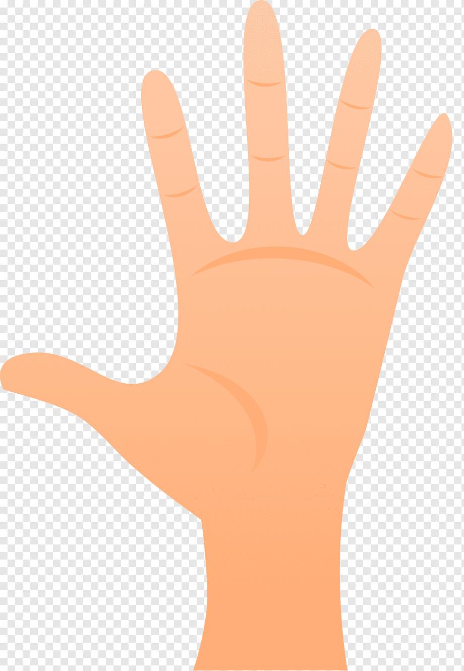 Gambar Telapak Tangan Animasi : gambar, telapak, tangan, animasi, Thumb, Model, Glove, Line,, Hand,, Orange,, Realistic, PNGWing