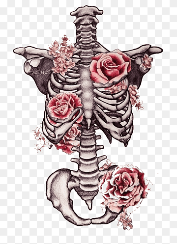Rib Cage Drawing With Flowers : drawing, flowers, Drawing, Human, Skeleton, Flower, Skeleton,, Pencil,, Heart,, Fictional, Character, PNGWing