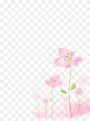 Pink flowers illustration Watercolor painting Flower Pink flowers background blue painted hand png PNGWing