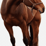 Andalusian Horse Friesian Horse Pony Arabian Horse Horse Show Horse Mare Horse Tack Png Pngwing