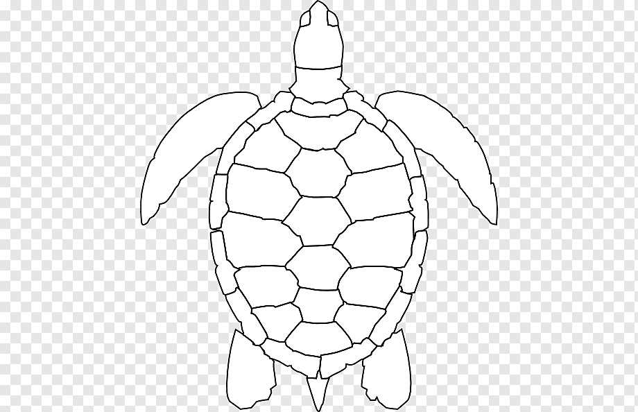 Turtle Art Green Sea Turtle Drawing Turtle Outline Symmetry Sticker Animal Png Pngwing