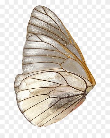 Sayap Kupu Kupu : sayap, Ilustrasi, Sayap, Kupu-kupu, Coklat,, Kupu-kupu,, Bulu,, Kupu-Kupu, Fantasi,, Hewan,, Merak,, Warna, PNGWing