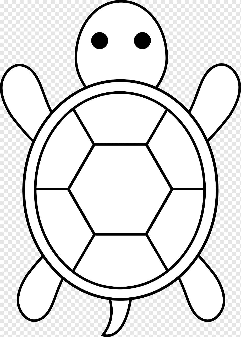 Gambar Kura Kura Animasi : gambar, animasi, Konten, Gratis, Kura-kura, Laut,, Gambar, Kartun, Bayi,, Putih,, Simetri,, Wallpaper, Desktop, PNGWing