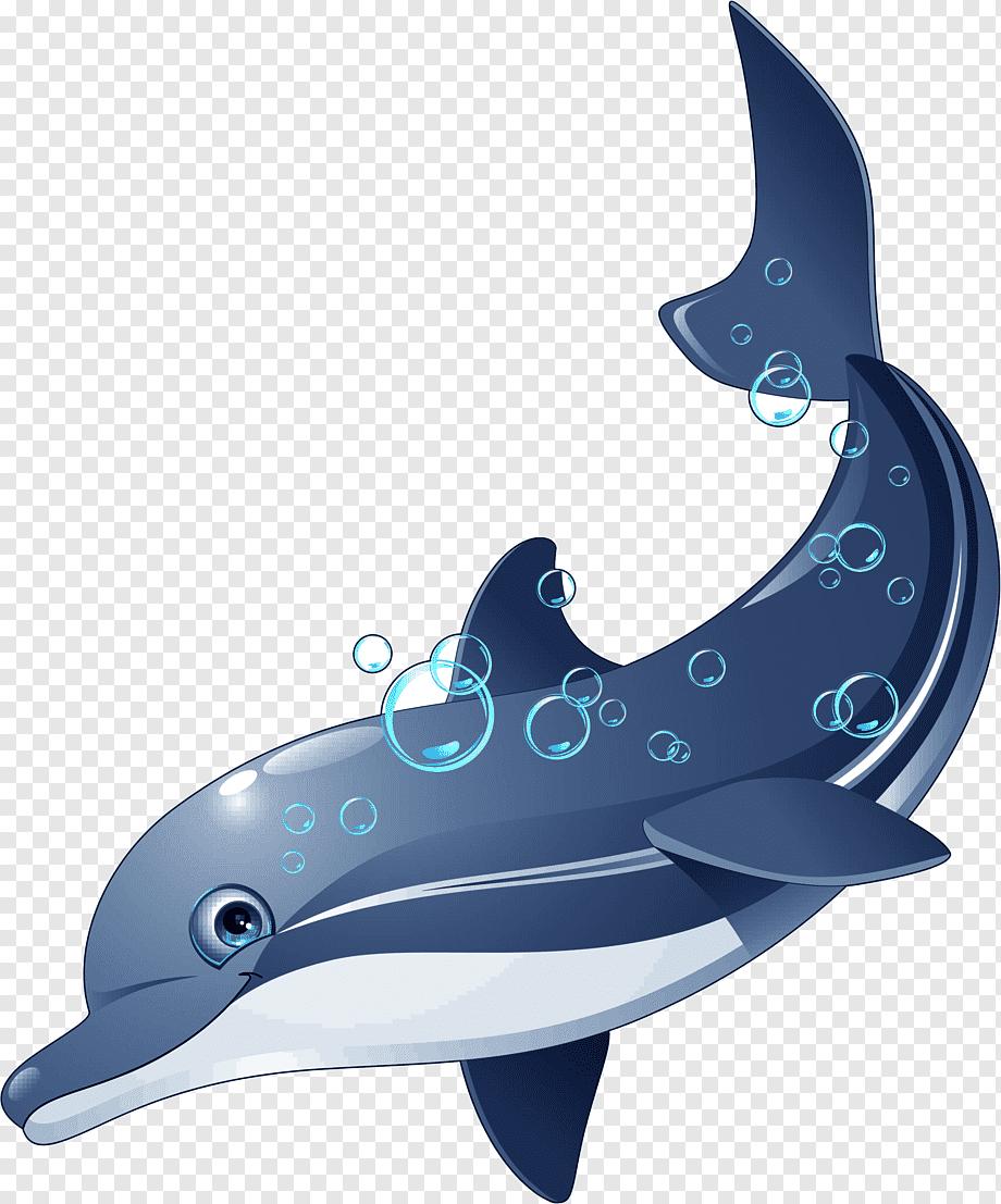 Lumba Lumba Animasi : lumba, animasi, Dolphin, Riddle, Coloring, Fish,, Dolphin,, Marine, Mammal,, Animals, PNGWing