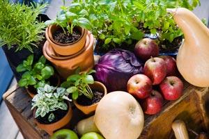 low calorie healthy foods