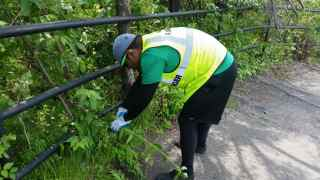 Removing vegetation at Pennslyvannia and Anacostia Drive
