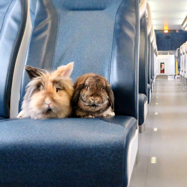 Traveling with a rabbit  WabbitWiki
