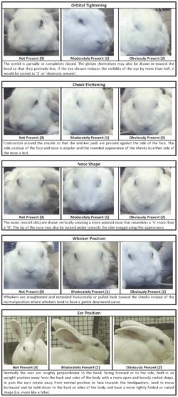 Veterinary emergencies  WabbitWiki