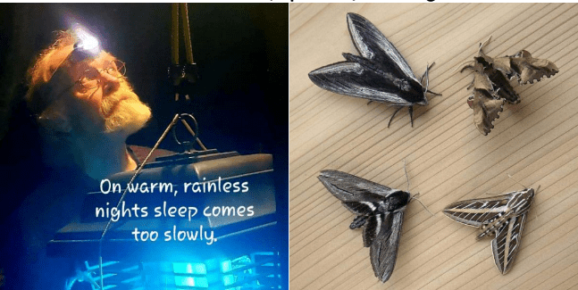 Carl Barrentine A Private Tutorial: Finding and Photographing Moths