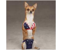 Proud Pups  Top 8 Patriotic Pet Costumes