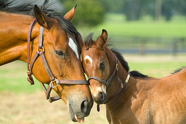 Baby Pony with Mom