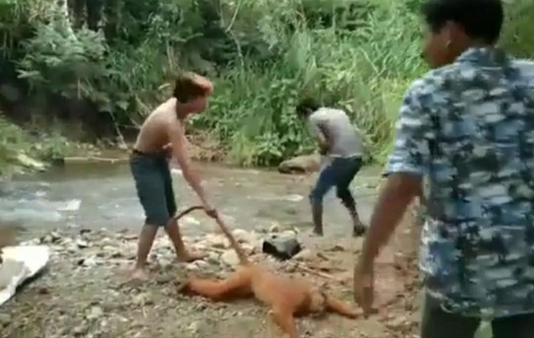 penganiyaya hewan di sumbar