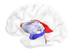 Latent Processes Governing Neuroanatomical Change in Aging and Dementia